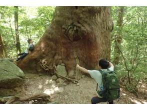 登山道 大木